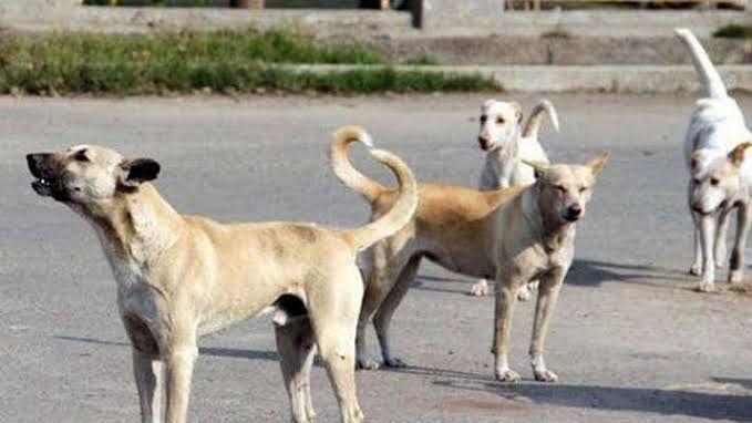राजधानी में कुत्तों ने मचाया आतंक, पुलिस जवान समेत कई लोगों को काटा