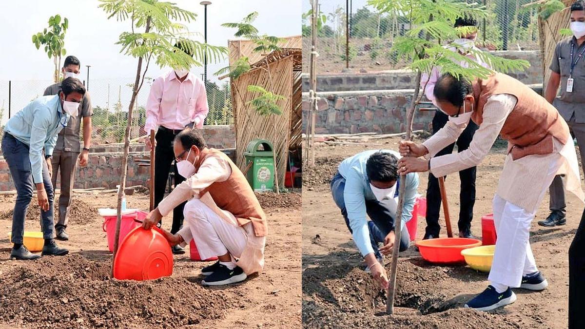 आज भोपाल के स्मार्ट पार्क में सीएम चौहान ने लगाया 'गुलमोहर का पौधा'
