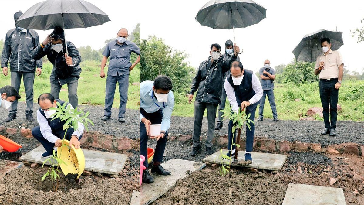 आज CM ने स्मार्ट पार्क में लगाया सप्तपर्णी का पौधा, कहा- आप सब भी पेड़ लगाएं