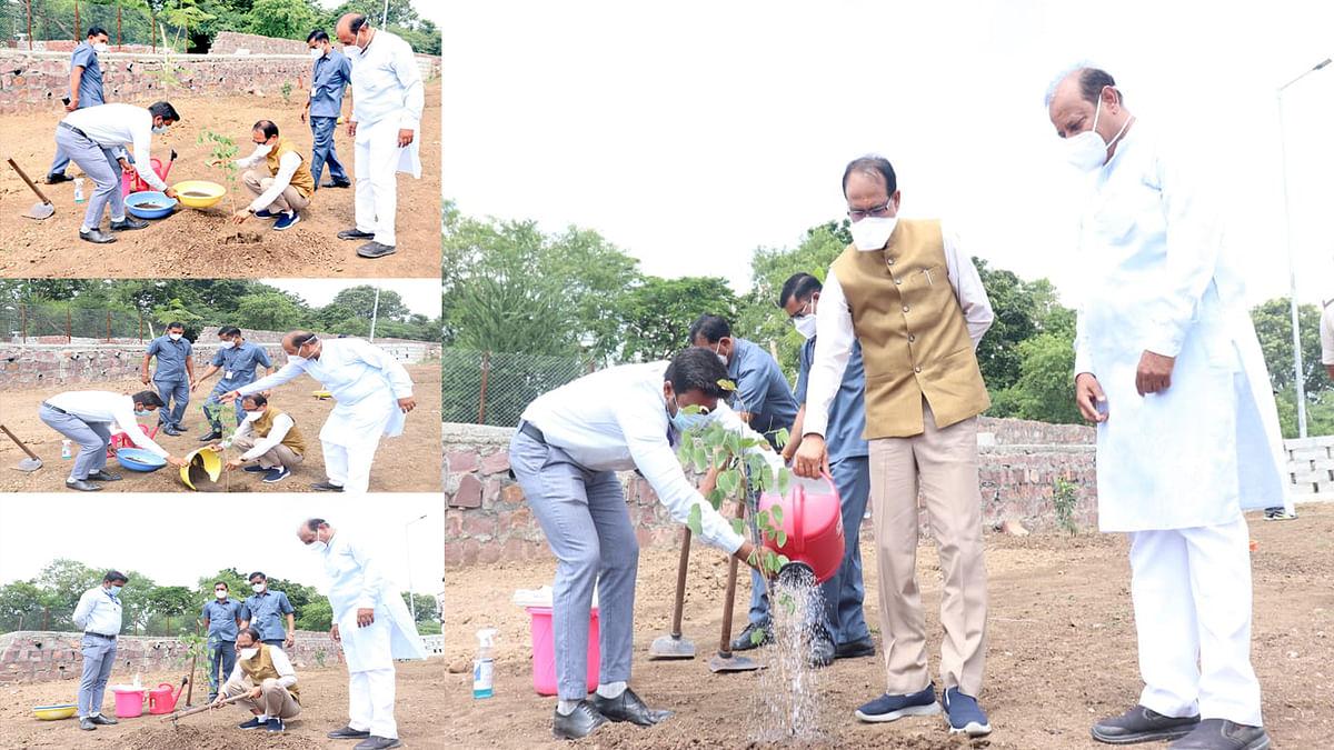 प्रतिदिन एक पौधा लगाने का क्रम जारी: आज सीएम शिवराज ने लगाया 'कचनार का पौधा'