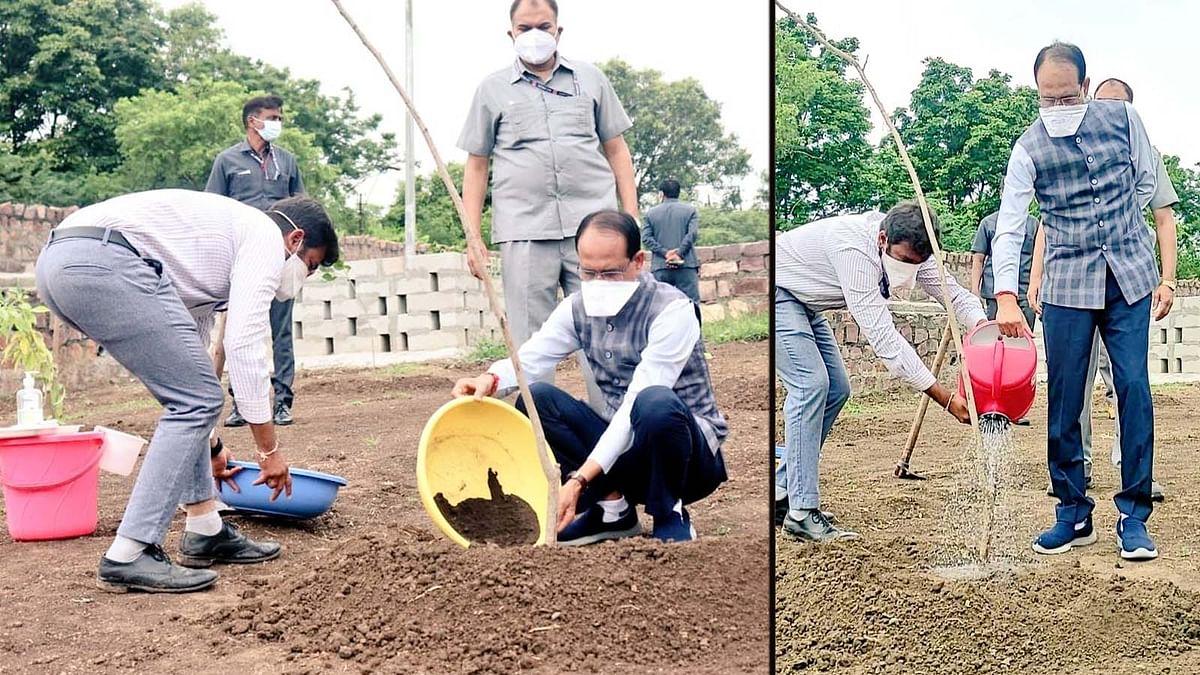 गुलमोहर का पौधा लगाकर CM शिवराज ने आने वाली पीढ़ियों के लिए कही ये बात