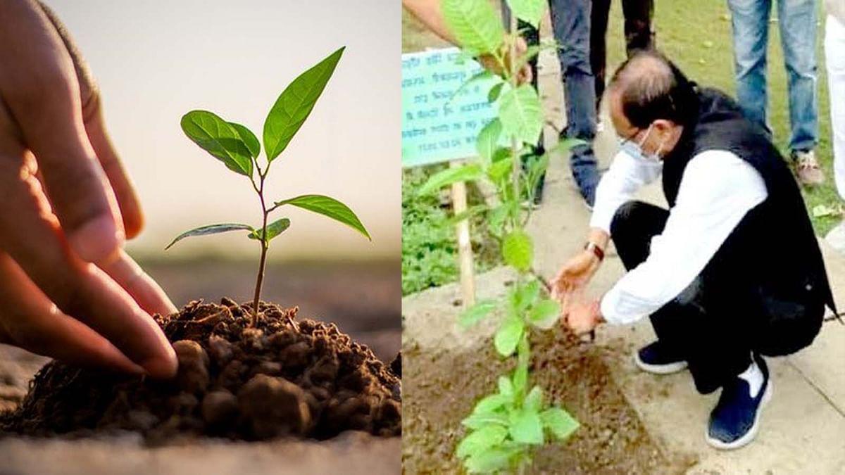 OnePlantADay: पौधारोपण को बढ़ावा देते हुए आज CM ने दिल्ली में लगाया कदंब का पौधा