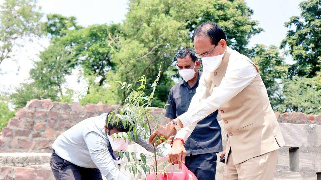 भोपाल: आज CM चौहान ने 'नीम का पौधा' लगाया, इस अवसर पर कही ये बात