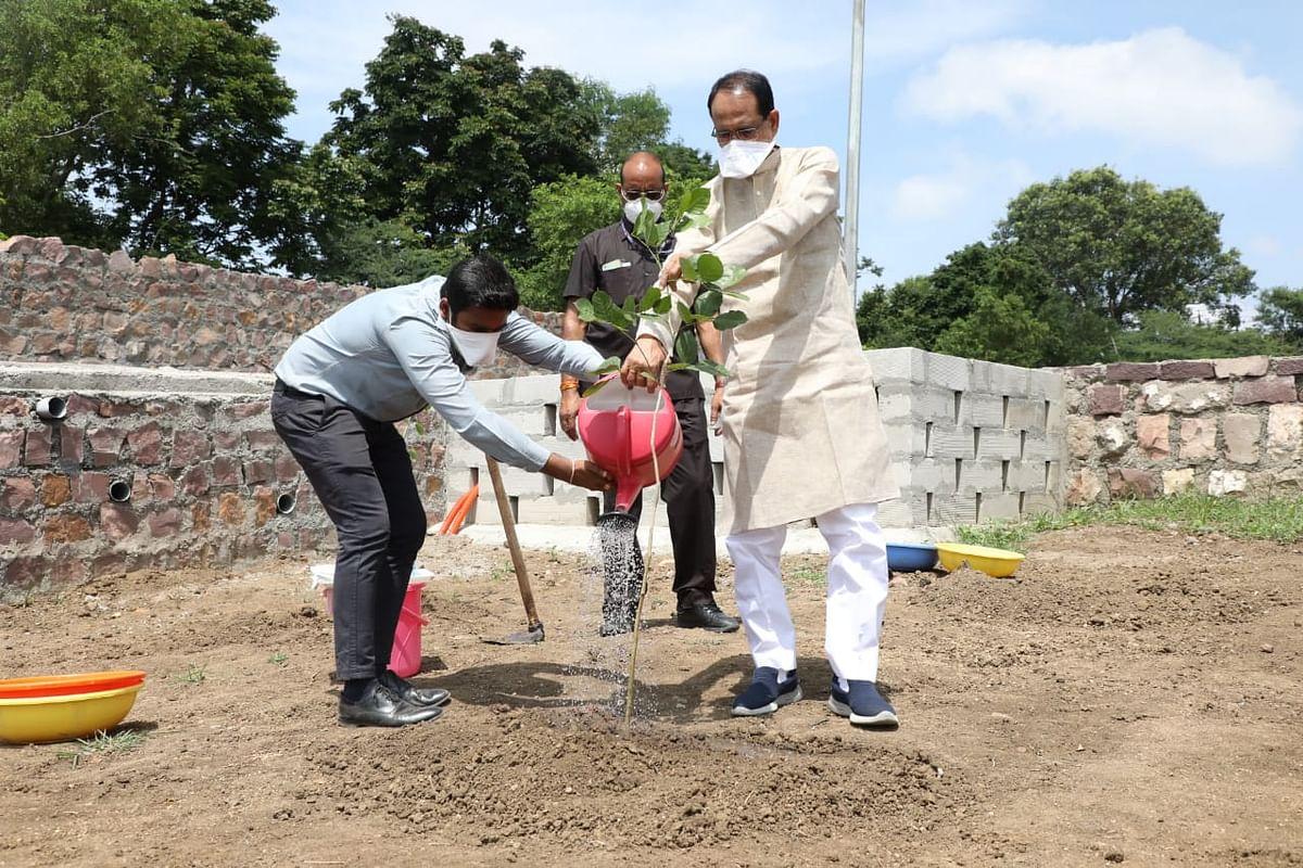 आज CM ने 'करंज का पौधा' लगाया, कहा- खुशहाली व समृद्धि के लिए पौधे रोपें