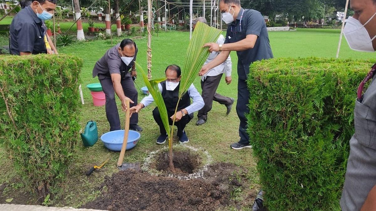 आज CM चौहान ने लगाया नारियल का पौधा, समस्त माता-पिताओं से किया ये अनुरोध