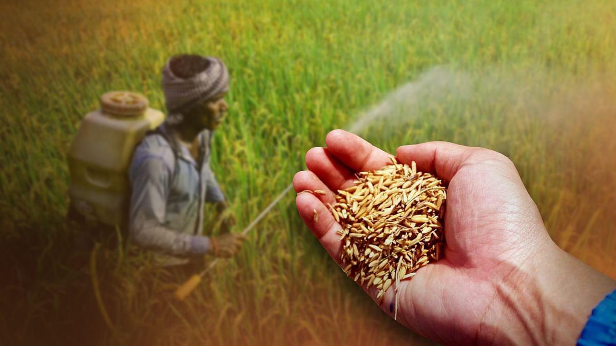 Shahdol : हाईएलर्ट के बावजूद नकली बीज का गोरखधंधा