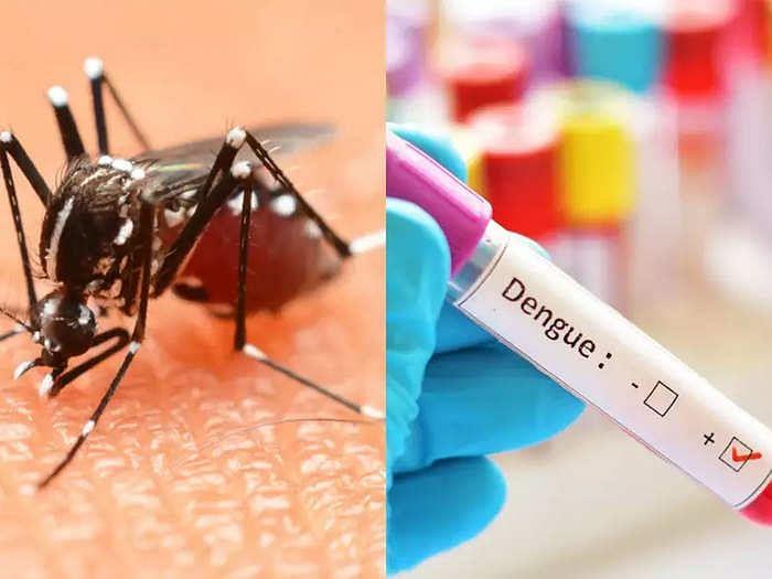 UP में डेंगू से मच रहे कोहराम के बीच ICMR ने की D2 स्ट्रेन की पुष्टि