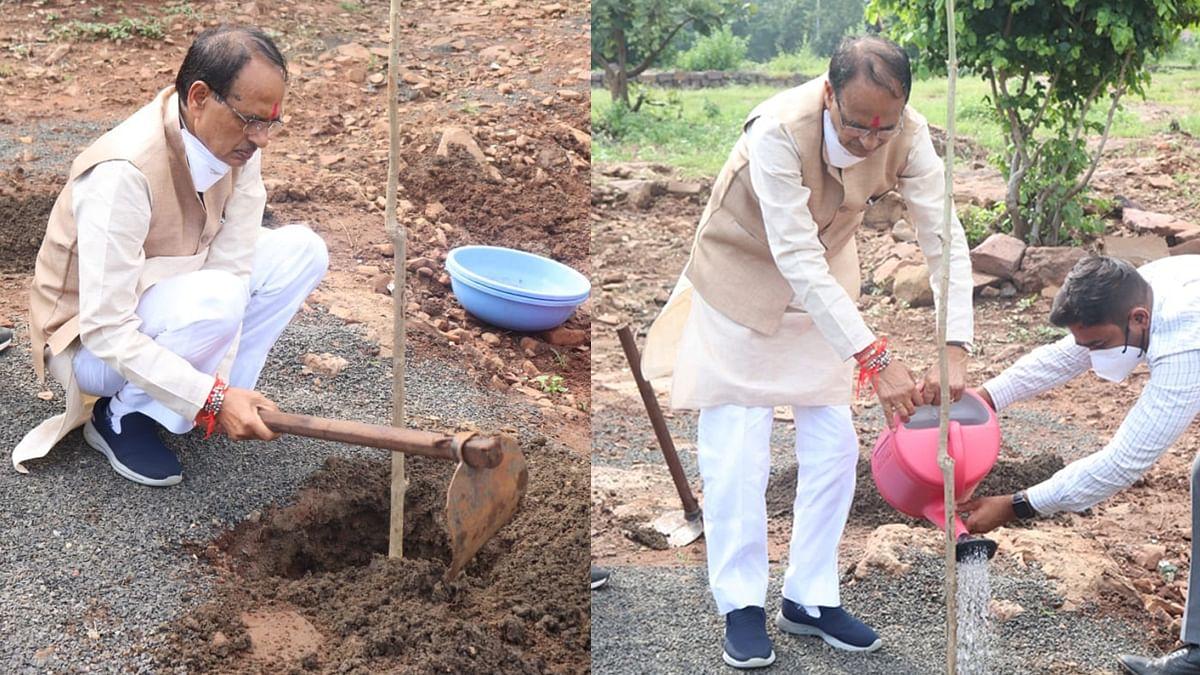 आज CM ने लगाया कदंब का पौधा, ट्वीट कर कहा- 'इस पेड़ को देव वृक्ष भी कहा जाता है'