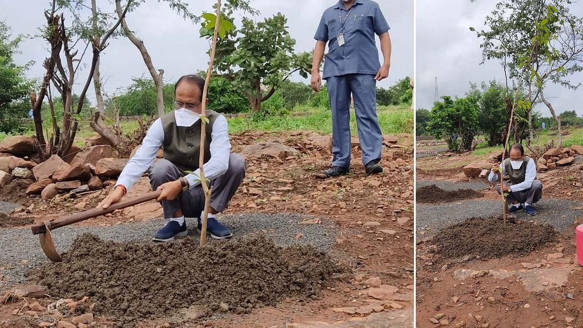CM शिवराज की One Plant A Day के तहत पौधारोपण की मुहिम जारी- आज लगाया केसिया का पौधा