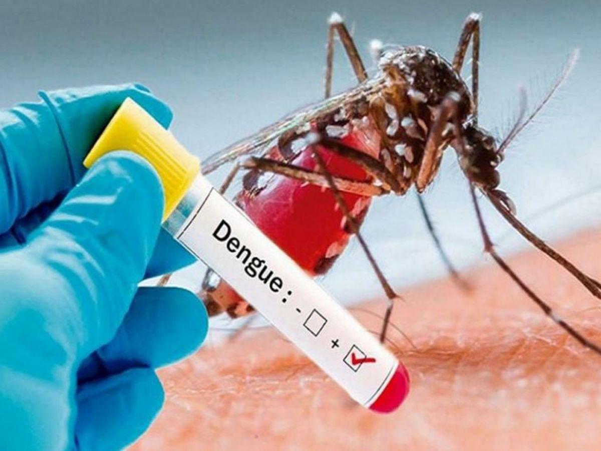 Gwalior : डेंगू ने दी दस्तक, 29 संदिग्धों की जांच में 15 निकले संक्रमित