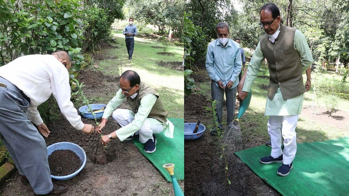 आज निवास परिसर में आंवले का पौधा रोपा, वृक्ष प्रकृति के प्राण हैं: CM शिवराज