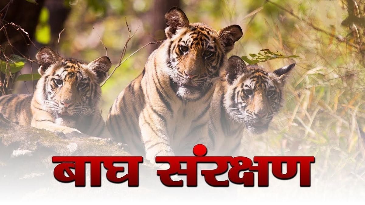 बाघ संरक्षण प्रबंधन में मध्यप्रदेश फिर होगा टॉप पर : डॉ. कुंवर विजय शाह