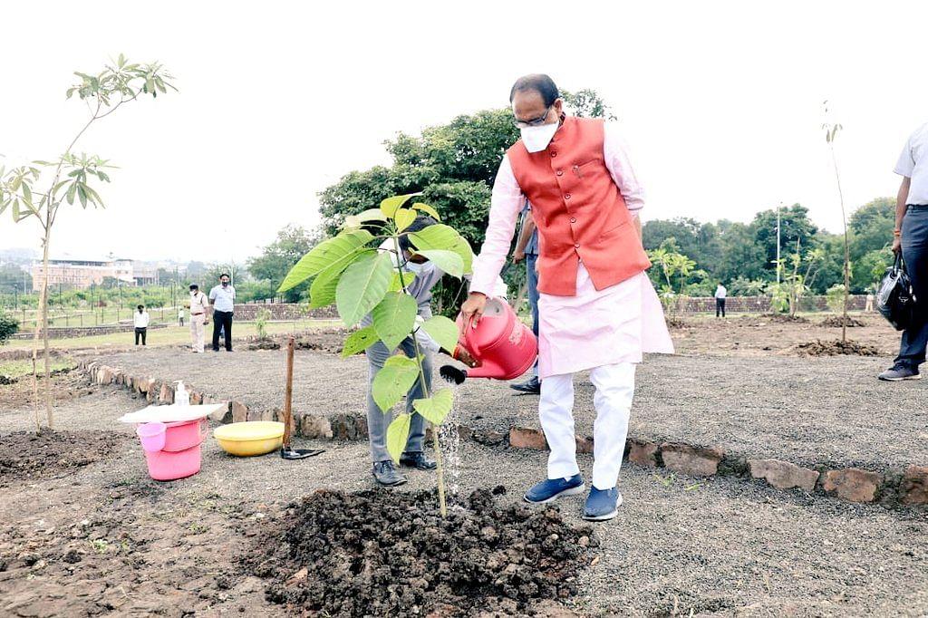 भोपाल स्मार्ट पार्क में CM शिवराज ने रोपा कदम्ब का पौधा और कहा- पेड़ पौधों को प्रेम दे