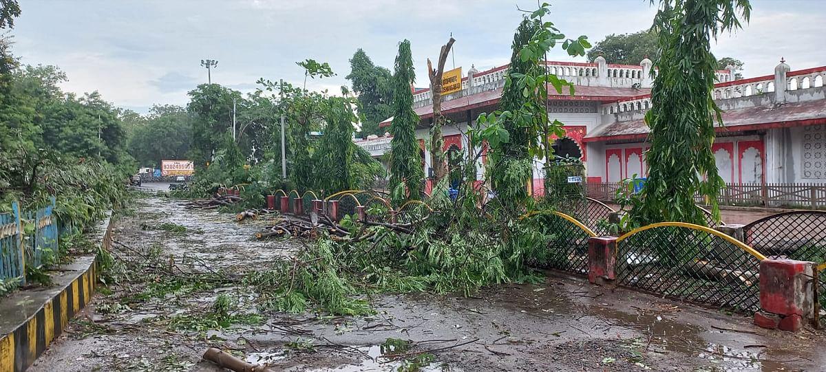 Hoshangabad : स्टेशन परिसर में काट दिए दर्जनों हरे वृक्ष