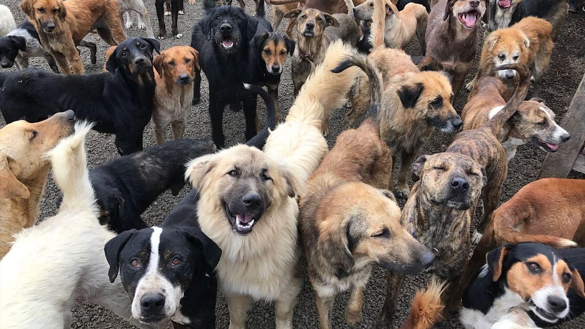 कर्नाटक में 100 से अधिक आवारा कुत्तों की हत्या