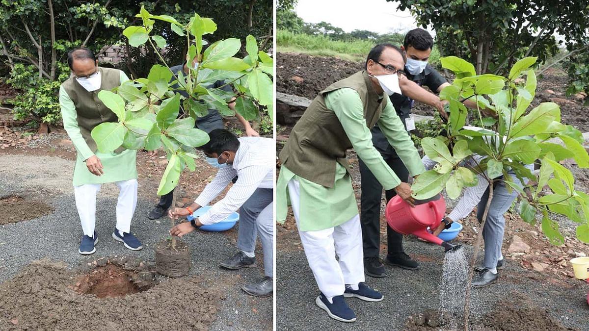 Bhopal के स्मार्ट उद्यान में CM शिवराज ने बादाम का पौधा रोपा
