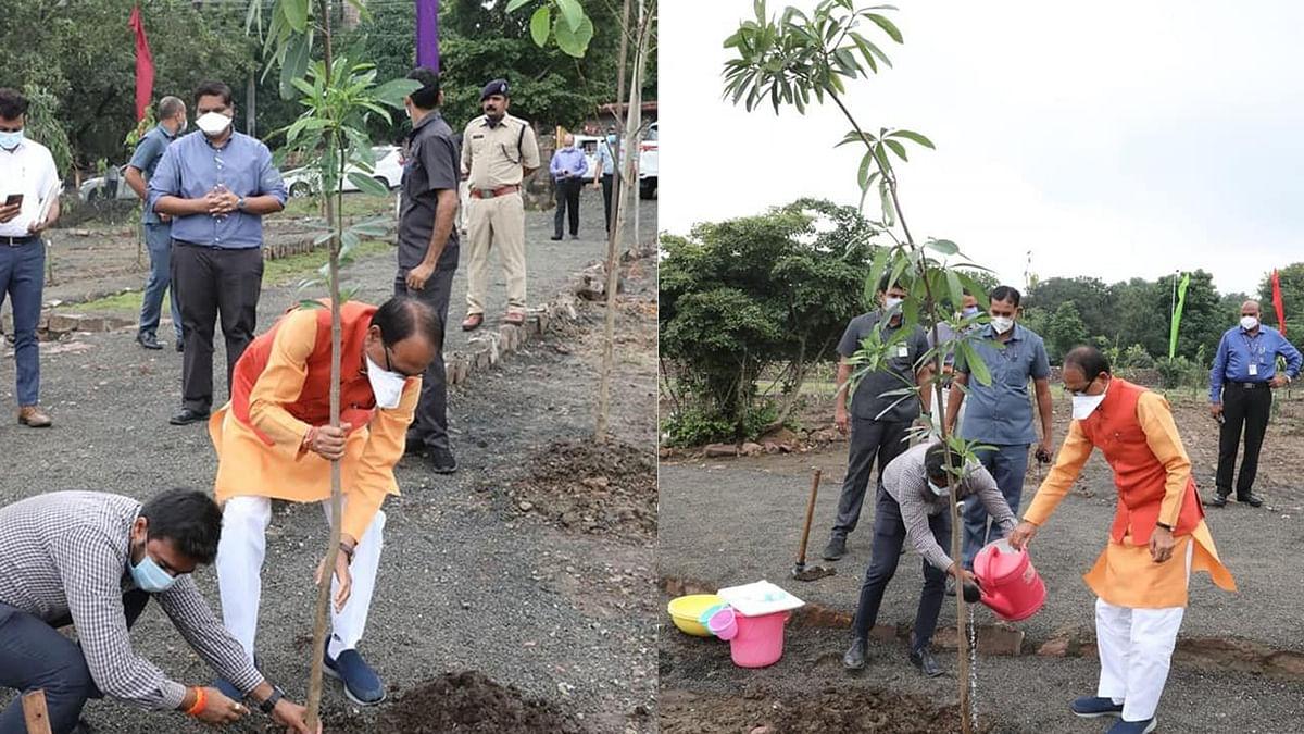 भोपाल: One Plant A Day के तहत आज सीएम ने स्मार्ट उद्यान में लगाया 'सप्तपर्णी का पौधा'