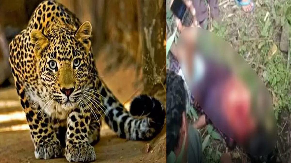 Seoni : तेंदुए के हमले में किशोरी की मौत, खून से सनी मिली लाश