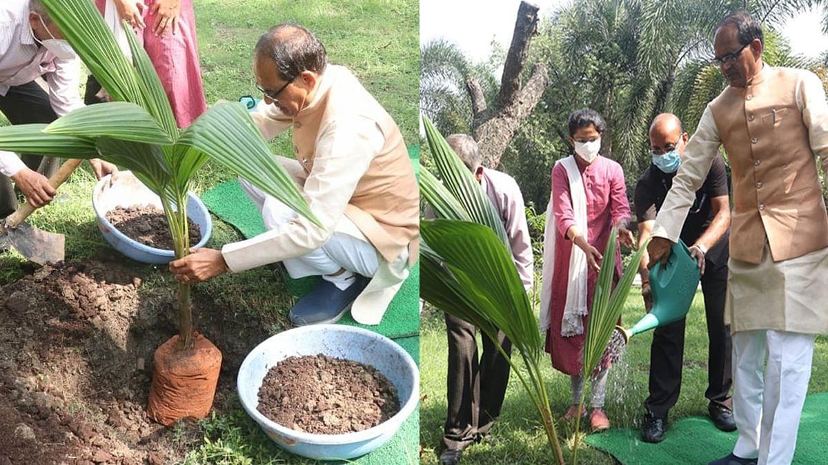 CM ने निवास परिसर में लगाया नारियल का पौधा, कहा- 'पौधरोपण भी मानव सेवा है'