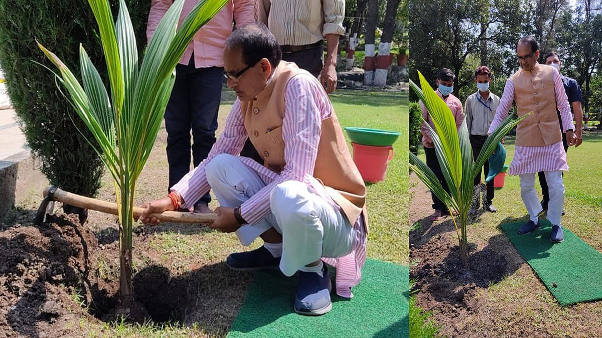 """नारियल का पौधा लगाकर CM बोले- """"भारतीय सभ्यता में इसे शुभ और मंगलकारी माना गया है"""""""