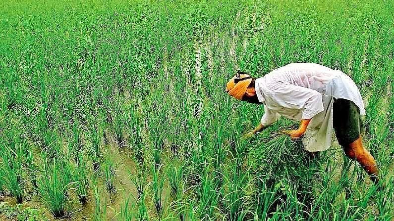MP: गांवों में तैनात होंगे 26 हजार कृषक मित्र, सरकार देगी एक हजार रुपये प्रतिमाह मानदेय