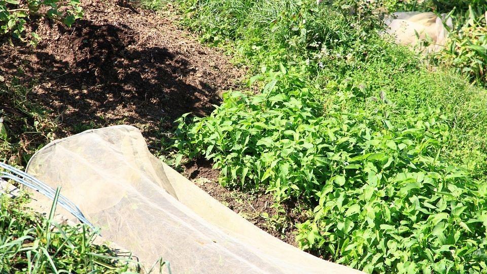 सेंद्रिय उत्पादनांच्या मागणीत वाढ; पण शेतकरी अनुत्साही