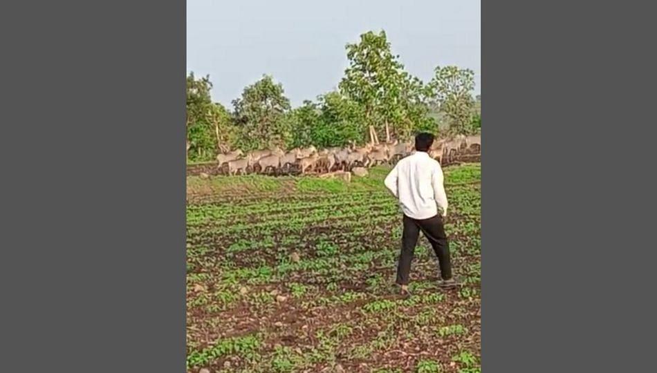 ...म्हणून या गावांतील शेतकरी 'ही' पिके पंधरा वर्षांपासून घेत नाहीत !