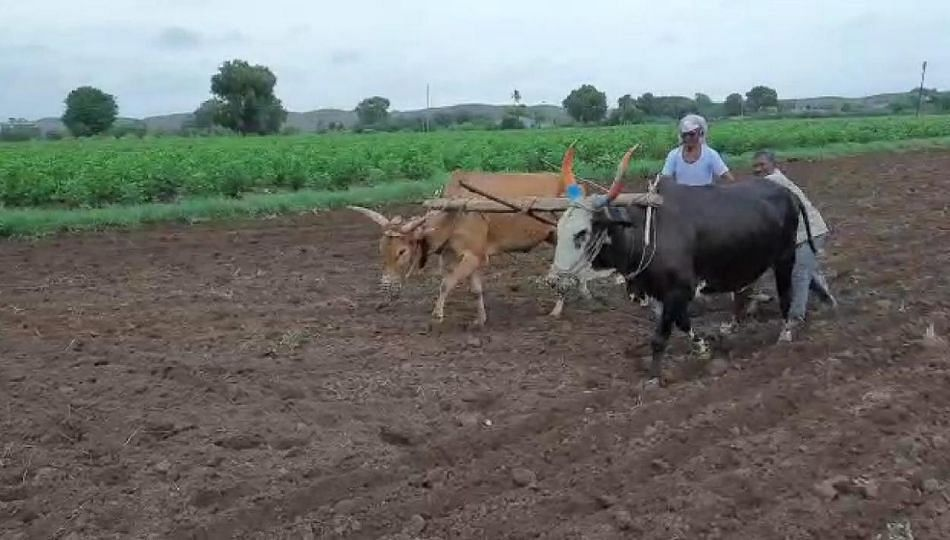 एकीकडे मुसळधार मात्र शिंदखेडा कोरडा; शेतकऱ्यांवर दुबार पेरणीचे संकट