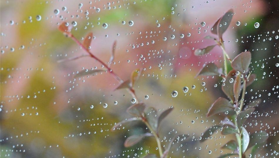 राज्यात सर्वत्र पाऊस; शेतकऱ्यांना दिलासा
