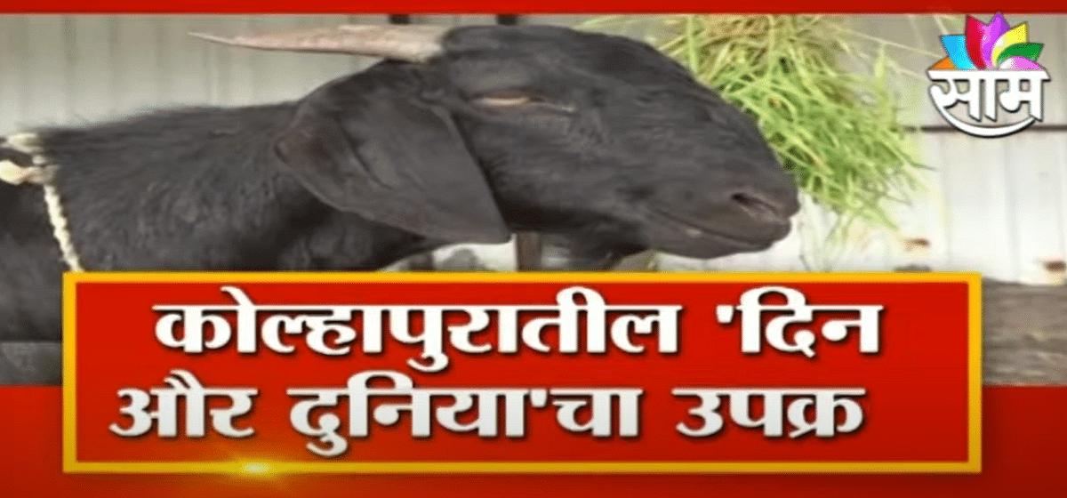 Saam Special | सामाजिक बांधिलकीसाठी बकरी ईद;पाहा व्हिडीओ