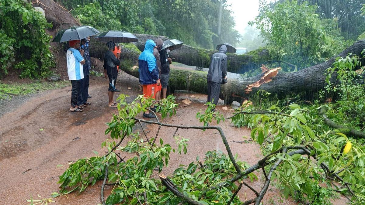 11 वाजण्याच्या सुमारास एक महाकाय झाड रस्त्यांमध्ये पडलेले आहे.