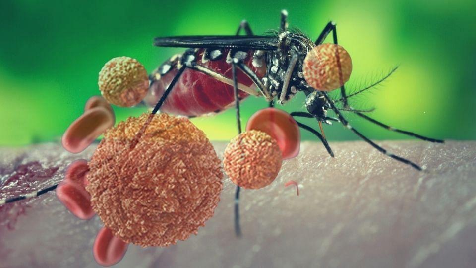 सावधान : केरळात झिका व्हायरसचे 14  रुग्ण