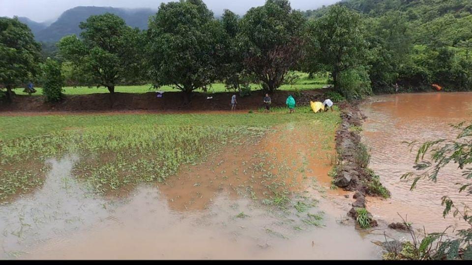 मुसळधार पावसाने मुळशीतील जनजीवन विस्कळीत; भातपिकांच नुकसान
