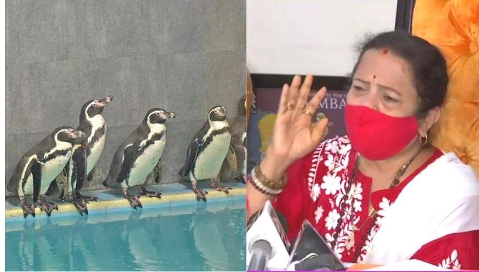 Penguin Tender|पेंग्विन टेंडर मागे घेतलं जाणार नाही; महापौर किशोरी पेडणेकरांची स्पष्टोक्ती!