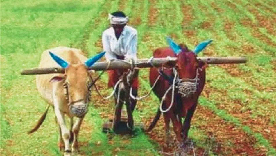 Breaking News : शेतकऱ्यांसाठी मोदी सरकारचा मोठा निर्णय..!