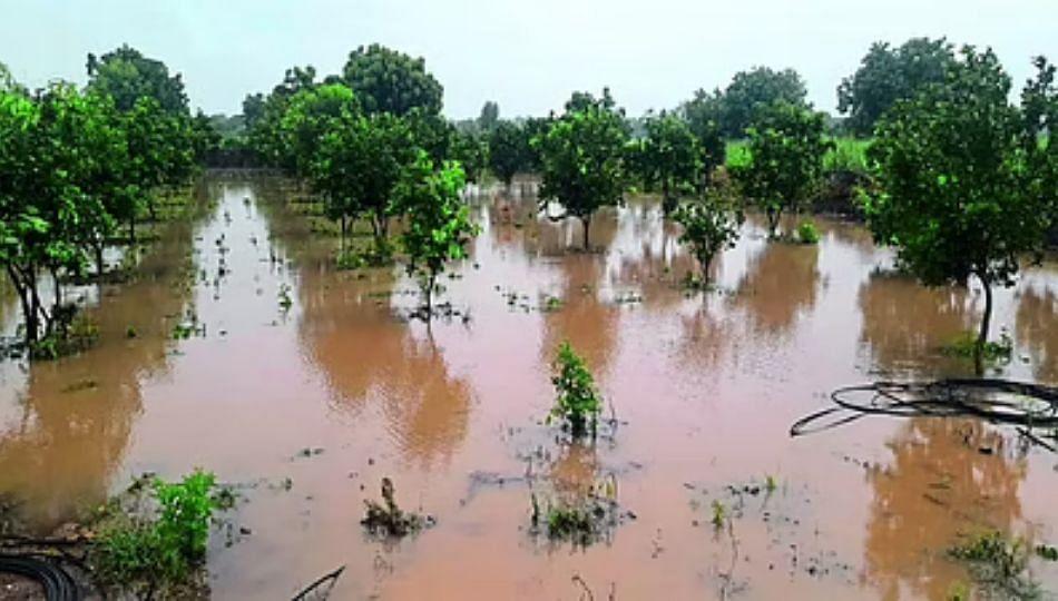 अतिवृष्टी झाल्याने मराठवाड्यातील शेतकऱ्यांवर 'ओल्या दुष्काळा'चे संकट!