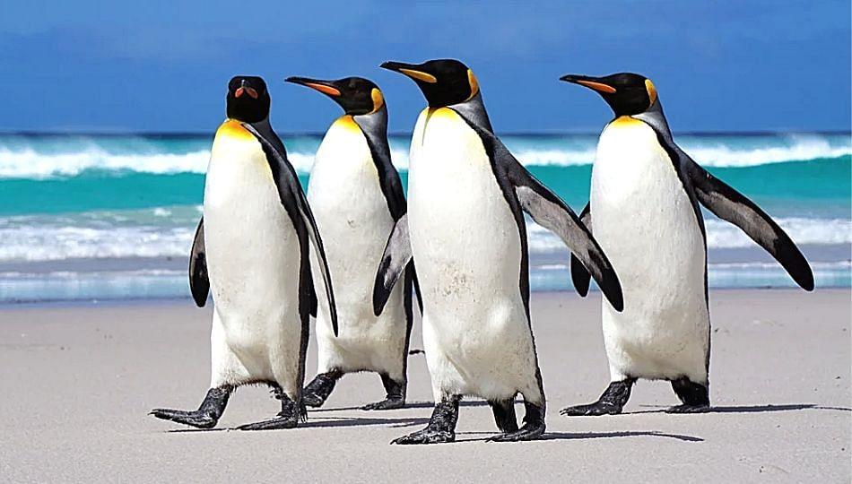 आदित्य ठाकरेंच्या संकल्पनेतील 'पेंग्विन' पुन्हा एकदा वादात, होतोय कोट्यवधी खर्च!