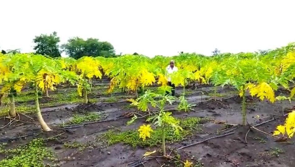 ठेकेदाराची एक चूक अन् शेतकऱ्याचं दोन लाखांचं नुकसान