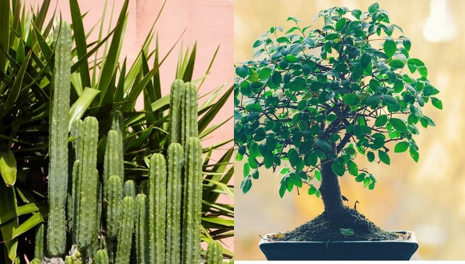 Vastu tips: चुकूनही घरात ठेवू नका 'ही' सात प्रकारची झाडे
