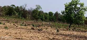 ५० एकर जंगल भुईसपाट, झेडपीतील महिला कर्मचाऱ्याचे धाडस