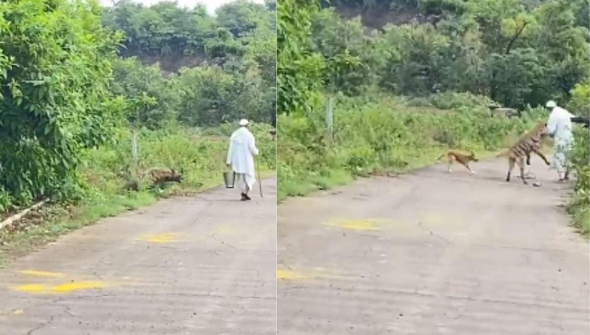 तरसाचा दोघांवर हल्ला, थरार मोबाईलच्या कॅमेऱ्यात कैद (पहा व्हिडिओ)