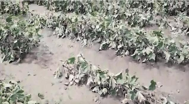 नाशिक, जळगावात महापुरानंतर मंत्र्यांचे केवळ दौरे; शेतकऱ्यांना मदत कधी?