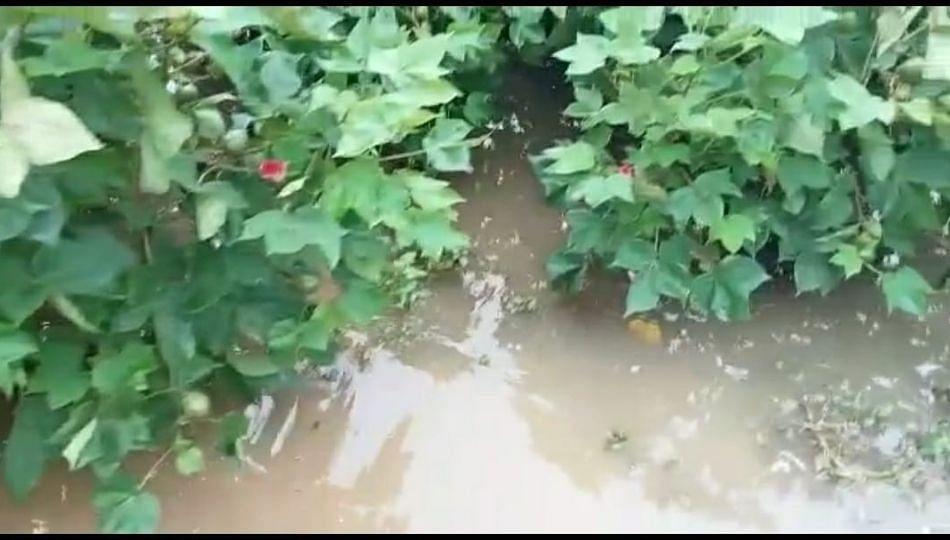 मुसळधार पावसाने अमरावतीतील जनजीवन विस्कळीत; शेतीचे प्रचंड नुकसान