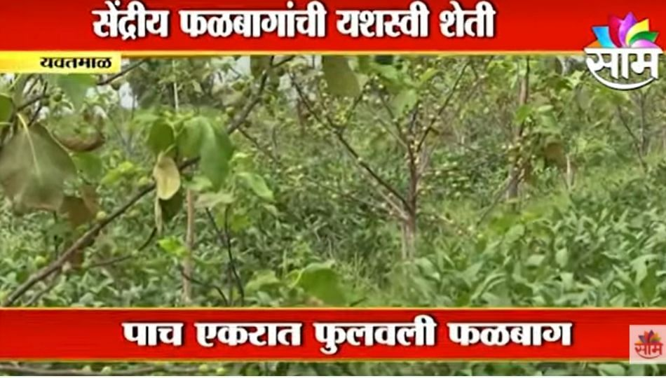 Special Report   शेतकऱ्यांनो ही बातमी पाहिलीत का? योग्य नियोजन करत फुलवली शेती