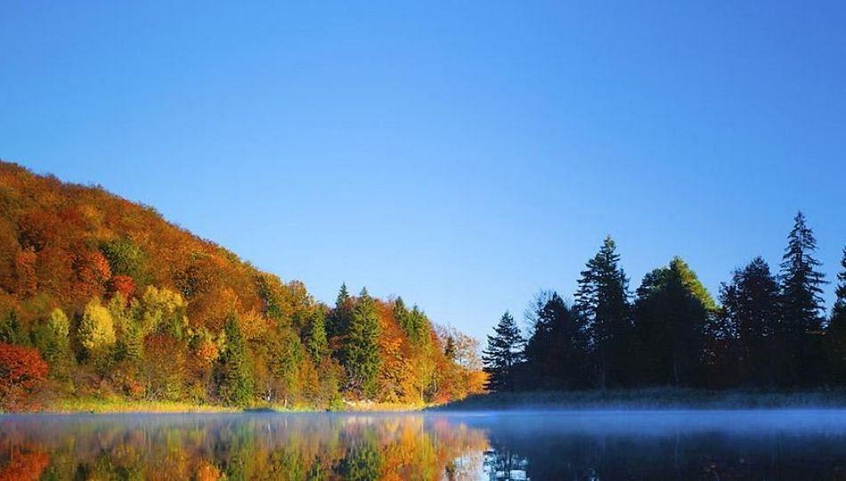 International Clean Air Day: का साजरा करतात? जाणून घ्या...