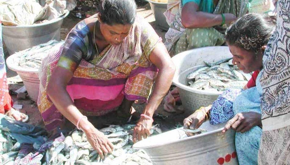 Online मासे विकणाऱ्या कंपनीच्या जाहिरातीमुळे मच्छीमारांची बदनामी