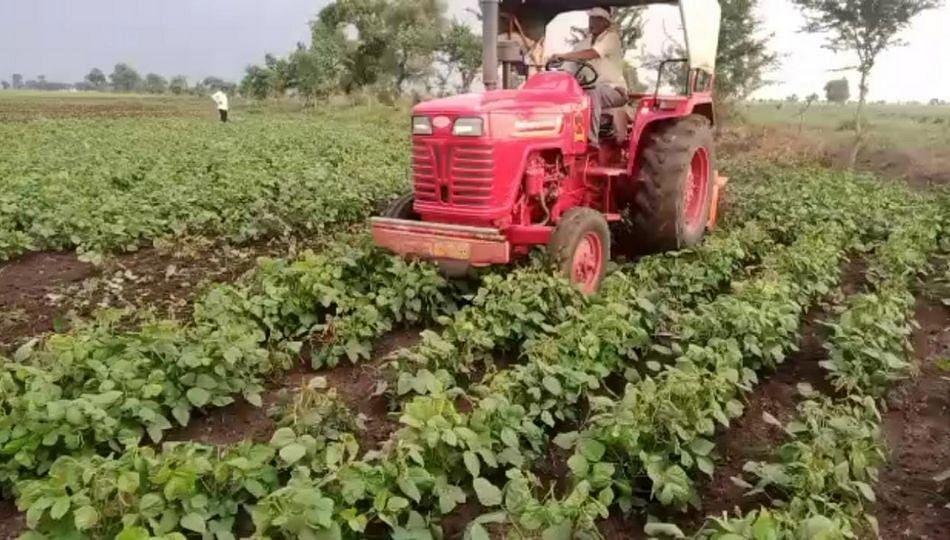 ...म्हणून अकोल्यातील शेतकऱ्यांनी फिरवले उभ्या पिकांवरती ट्रॅक्टर!