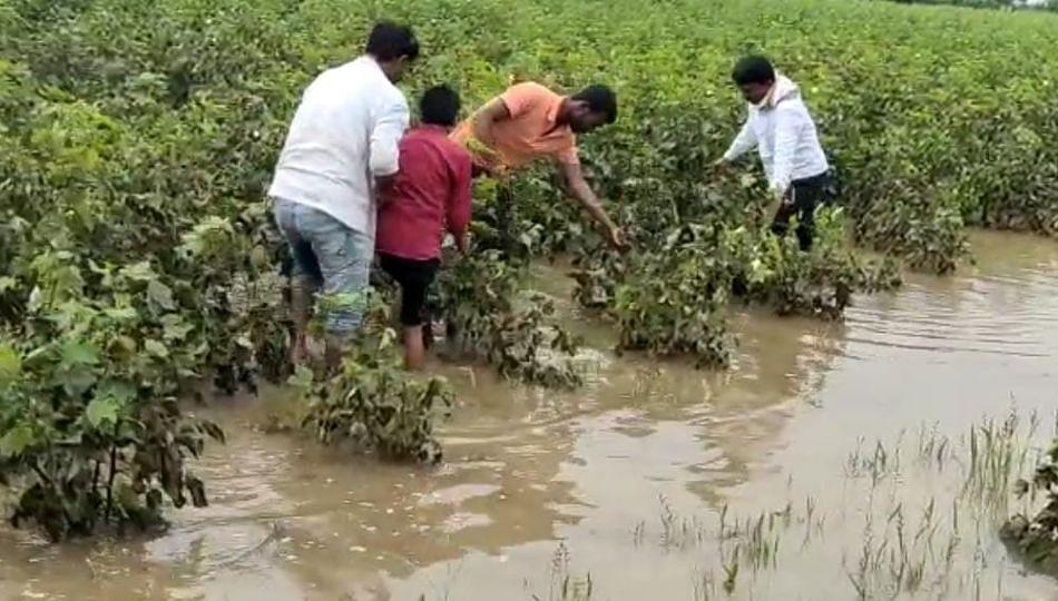 बीड जिल्ह्यात पावसाचा कहर! पिकांमध्ये आठ दिवसांपासून गुडघाभर पाणी