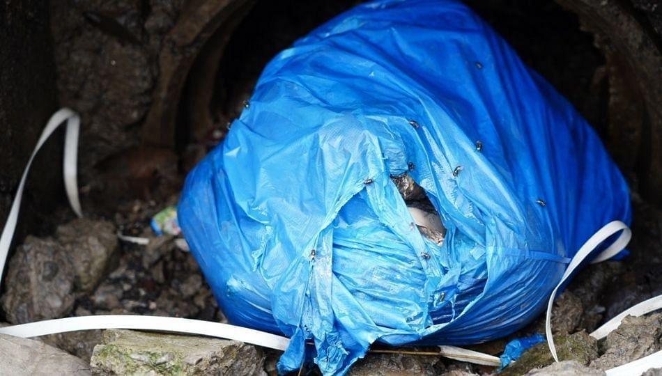 नवी मुंबईत माणुसकीला काळिमा फासणारी घटना, प्लास्टिक पिशवीत मृतदेहाचे तुकडे