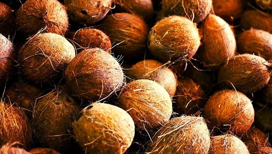 अबब! फळविक्रेत्यानं खरेदी केला तब्बल ६.५ लाखाच नारळ